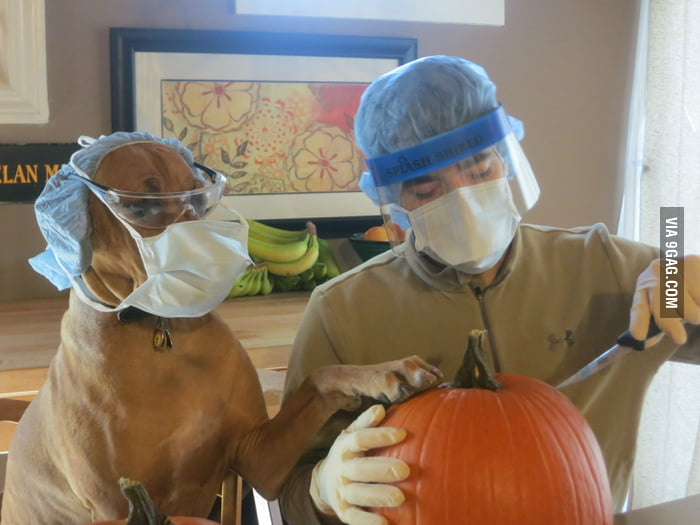 Carving the pumpkin with dog