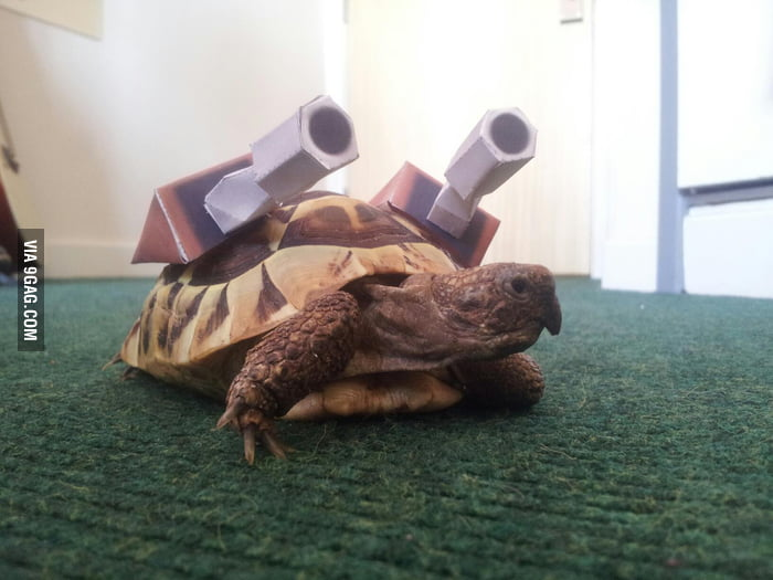 This tortoise is ready for Halloween!