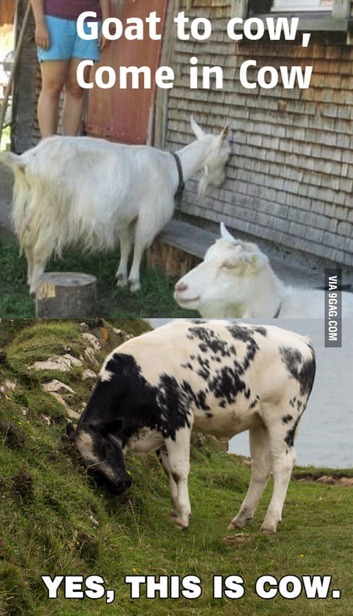 Goat to Cow.