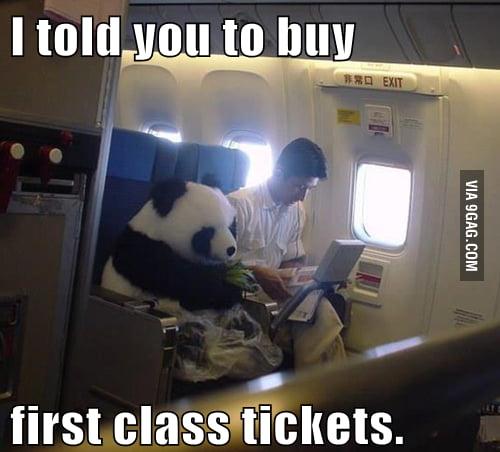 Unappreciative traveling panda