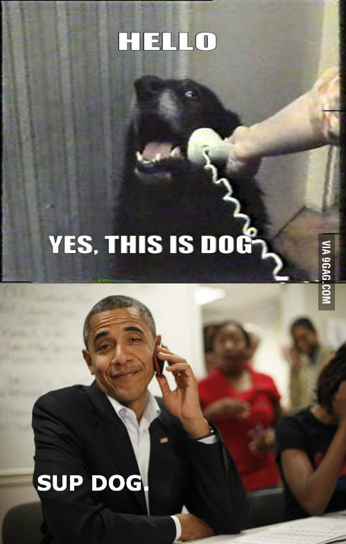 Dog must live in a swing state.