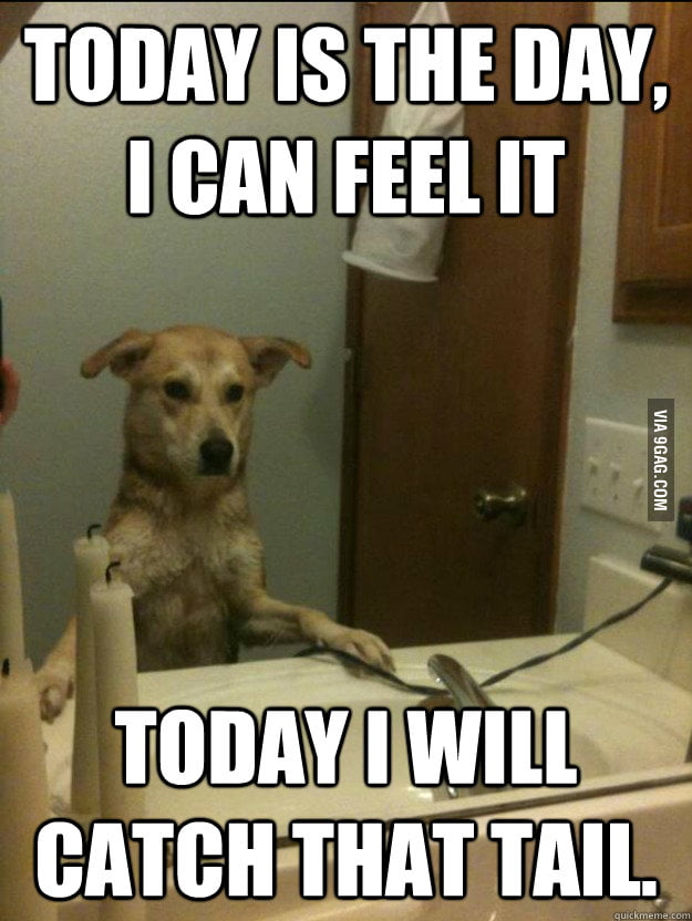 Reckoning day for Dog