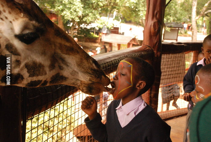 French-kissed a giraffe once