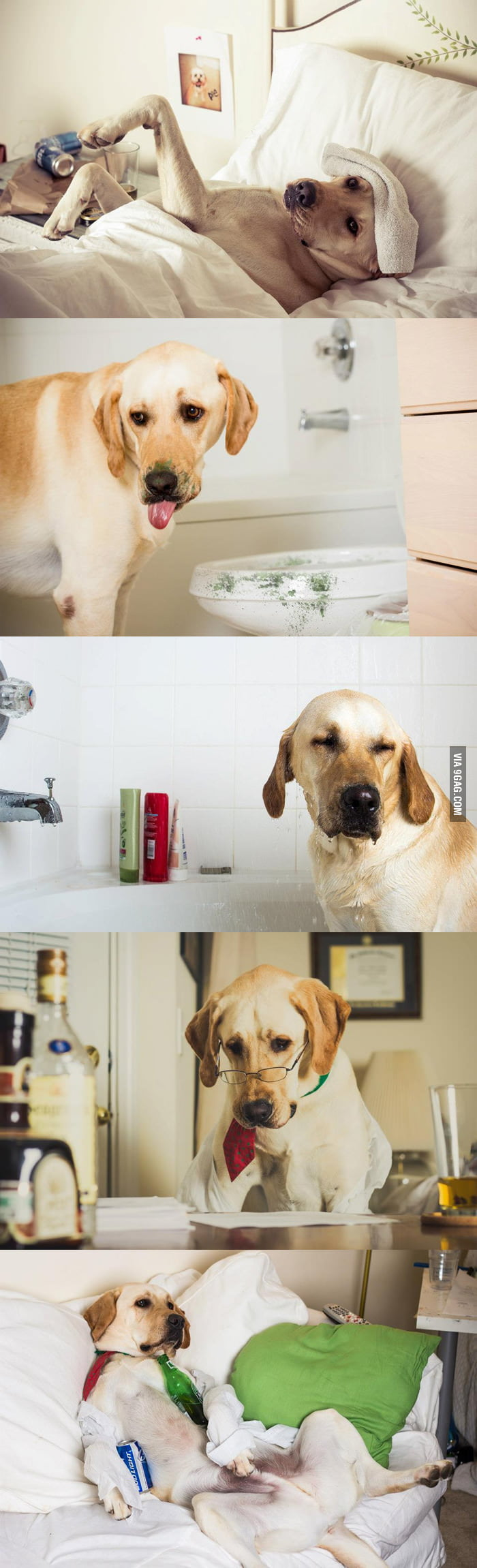 A day in the life of a dog.
