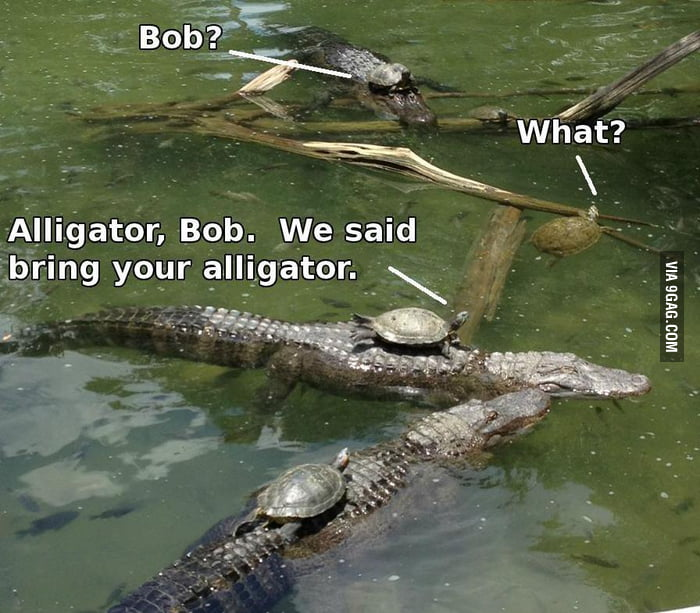 """Bob, we told you to bring your own alligator."""