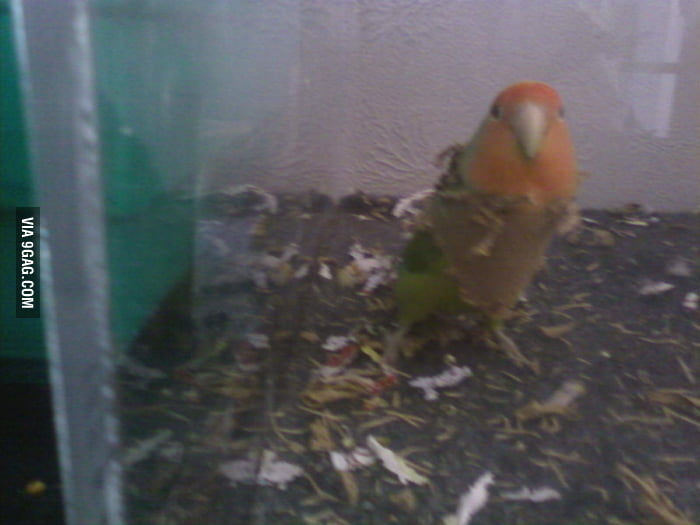 Gave my lovebird a cardboard toilet paper tube.