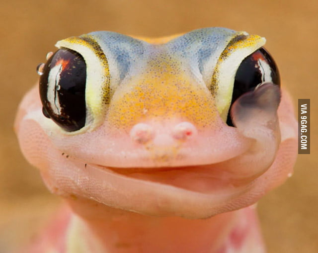 Awesomely Photogenic Lizard