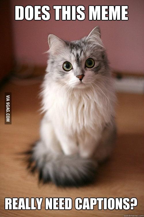 Photogenic Pussycat