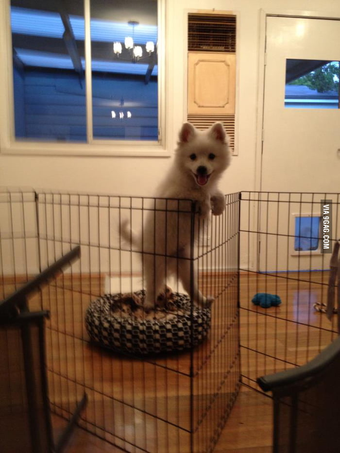 He always climbs that fence.