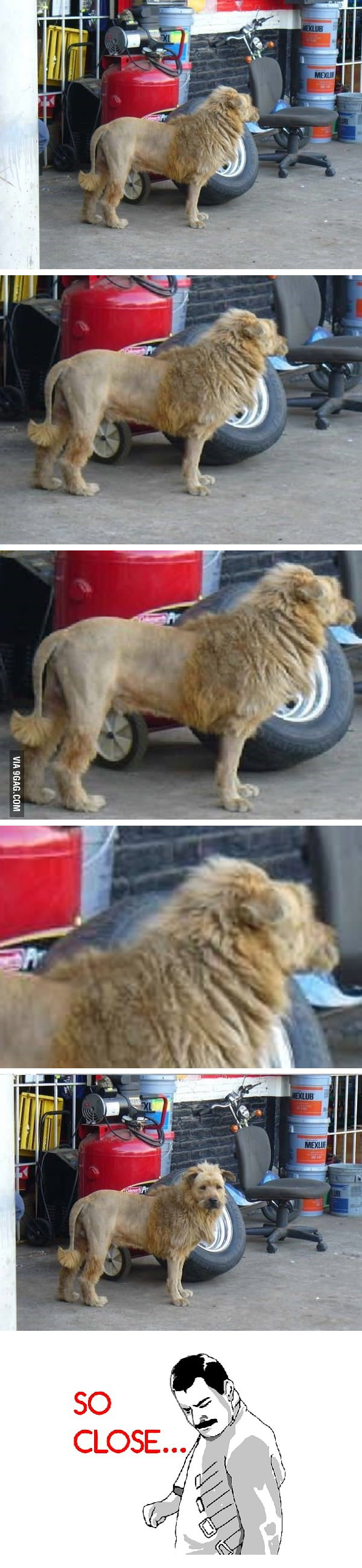 A Lion in the City?