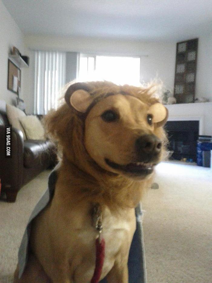 """I'm not a dog, I'm Super Lion!"""