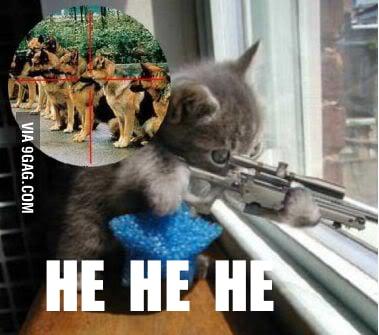 Cat Sniper 9gag