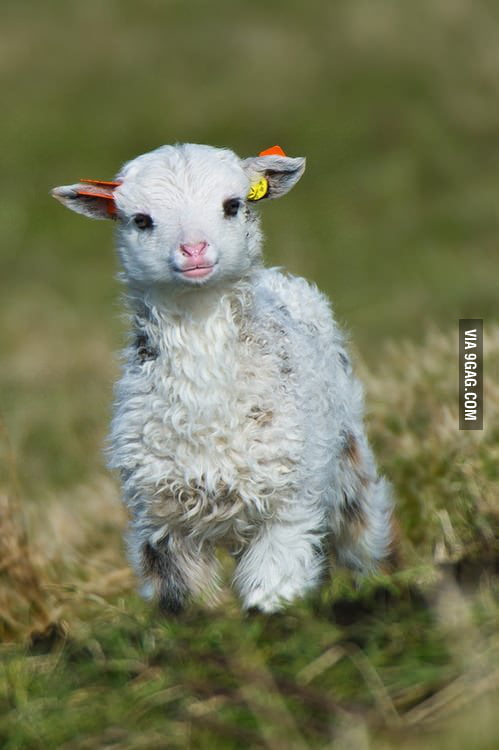 I don't usually like sheep but this little guy is adorable.
