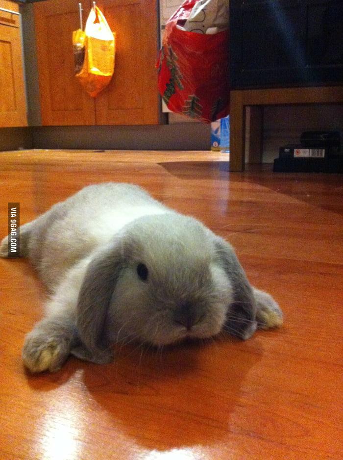 Little bunny still hasn't learnt how to walk.