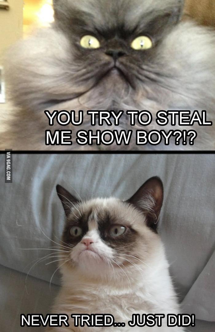 Colonel Meow vs. Grumpy Cat - Round 1