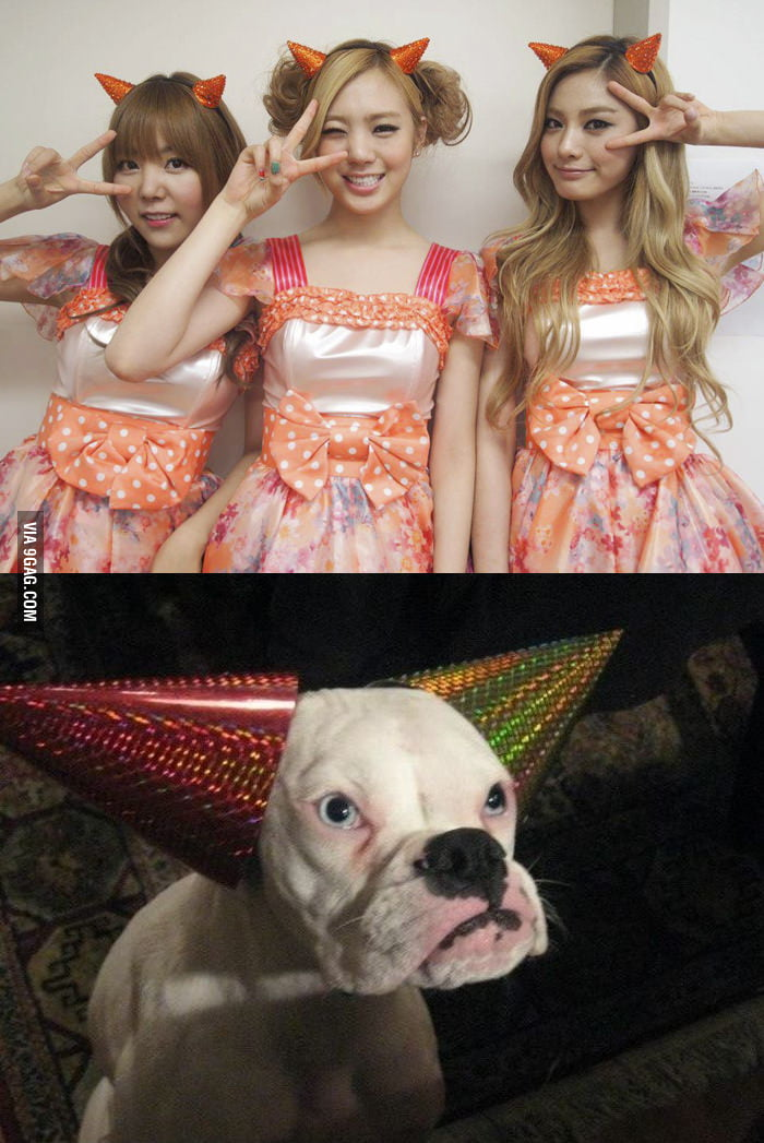 Orange Caramel Dog