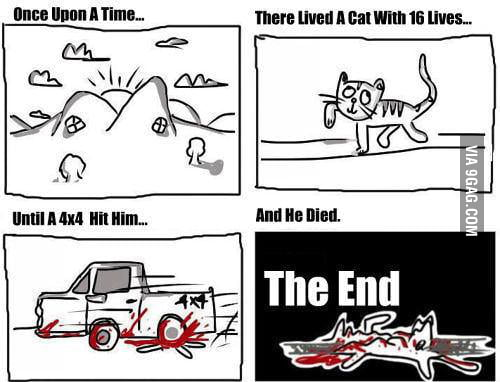 A cats live