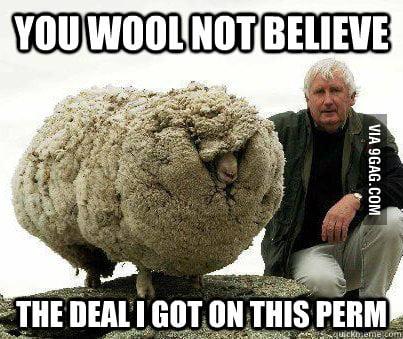 Fabulous Sheep