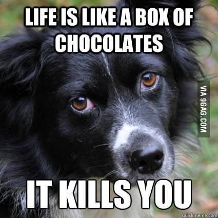 Depressed Dog on life.