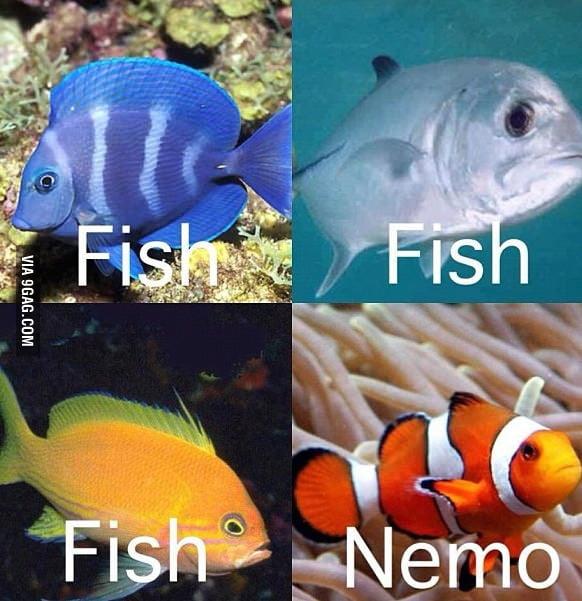 Fish... fish... fish...