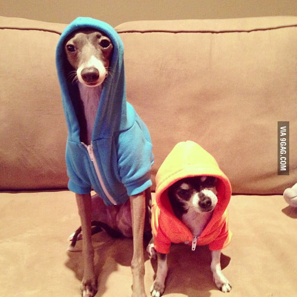 Gangsta Dogs