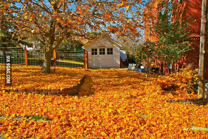 That's why I love autumn.