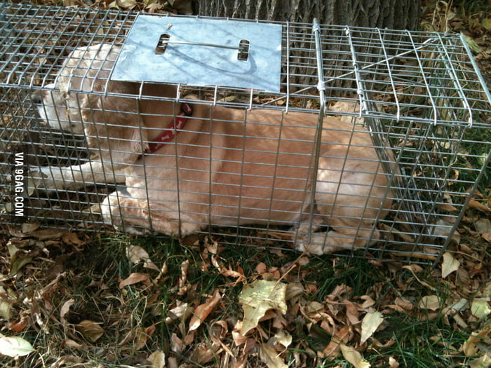 My dog got attacked by a raccoon, so I set up a trap...