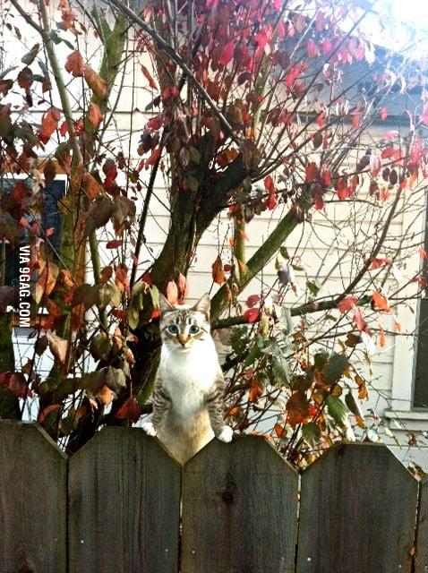 Caught my creepy neighbor watching me change again.
