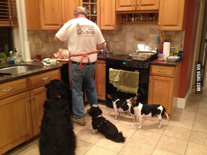 Dogs' attention wh**e.