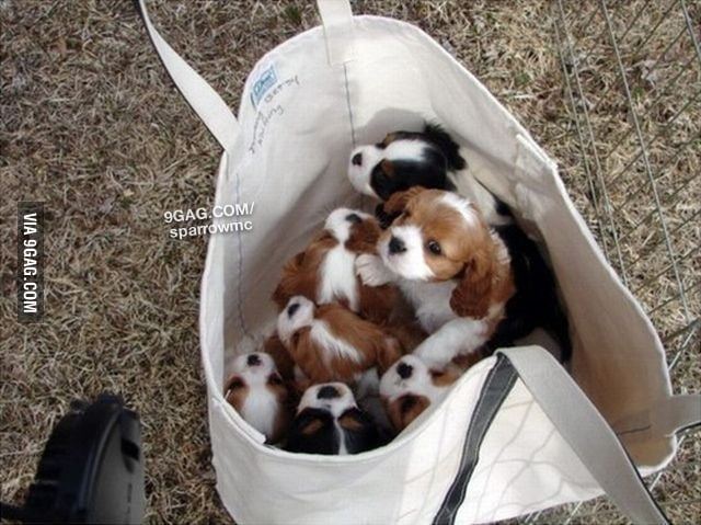 Just a bag full of puppies
