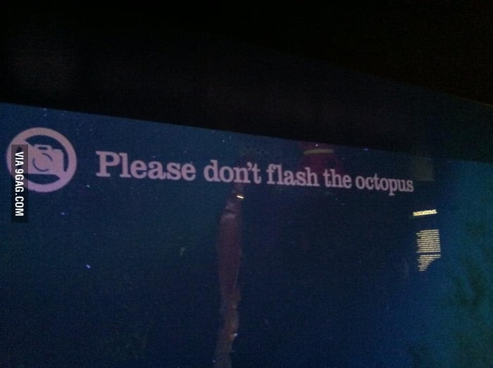 The Octopus is terribly uncomfortable by public nudity