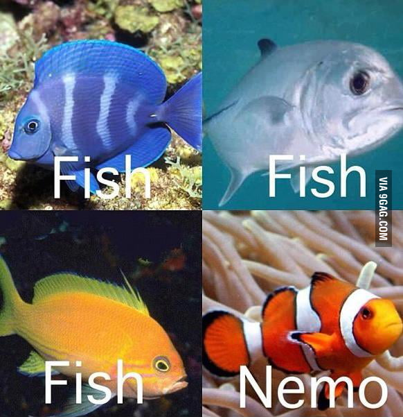 How I see fish.