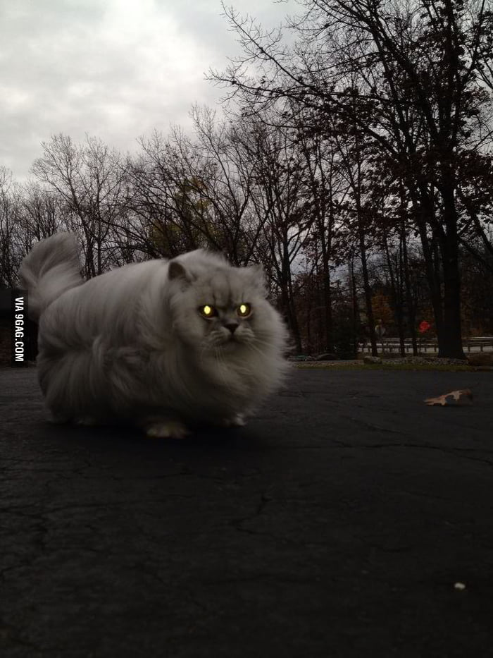 Fluffy cat on a windy day.