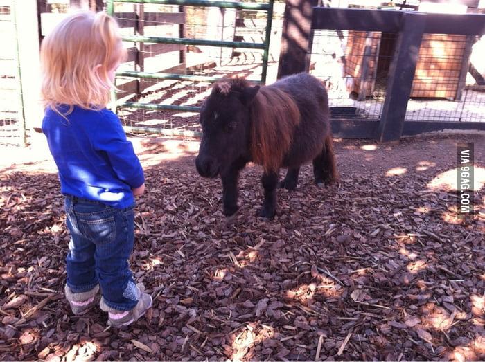 Little girl meeting a duck-sized horse.