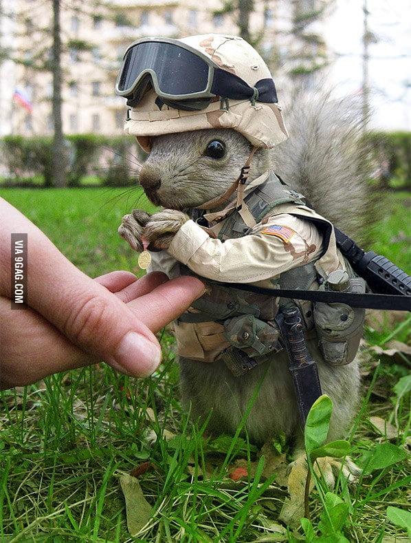 Soldier Squirrel