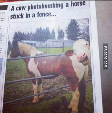 Best photobomb ever!