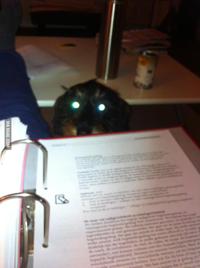 And you thought cats were the only evil pets