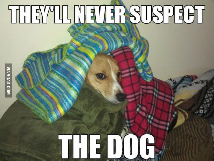 Dog looks suspicious
