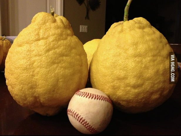 These lemons are pretty big.