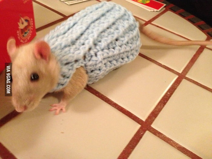 He got a new sweater for winter!