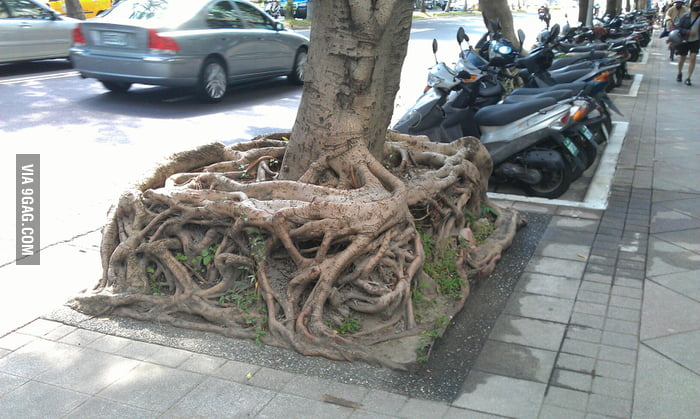 Root Cube