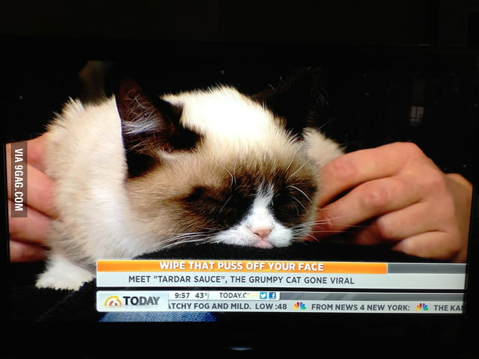 Grumpy cat made my morning.