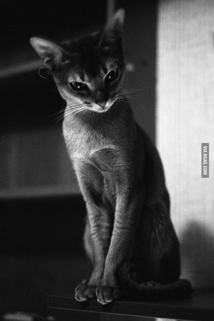 This cat defines aesthetics.