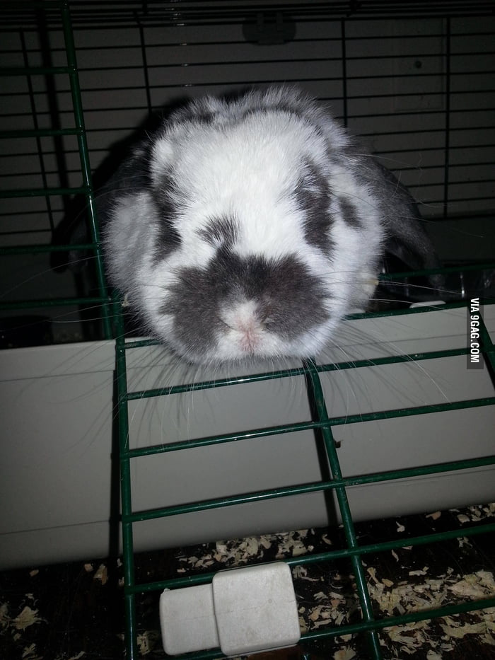 "What's the name of this bunny? ""Rorschach""."