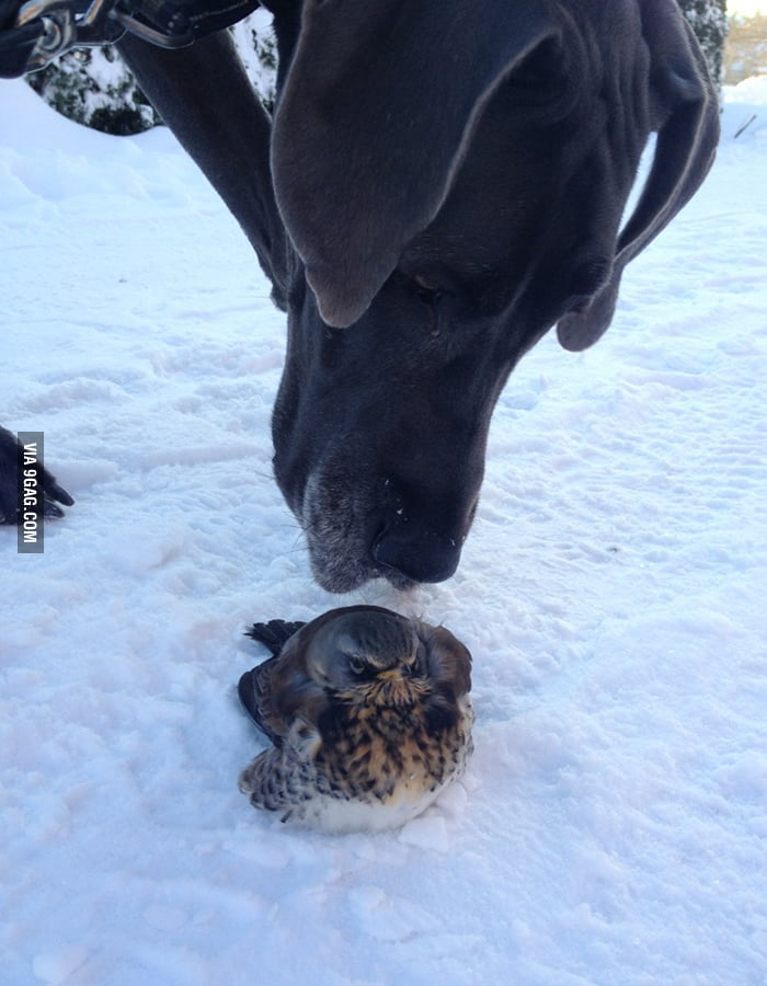 My dog met an Angry Bird today.