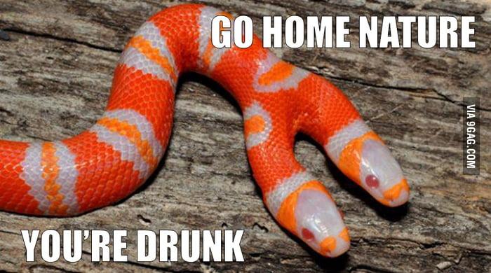 GO HOME NATURE!