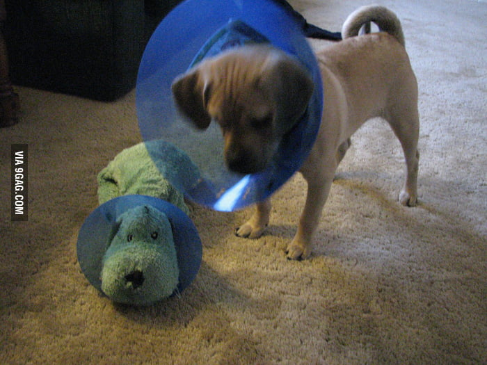 He and his buddy are in the cone of shame together.