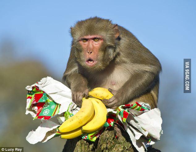Bananas again?!