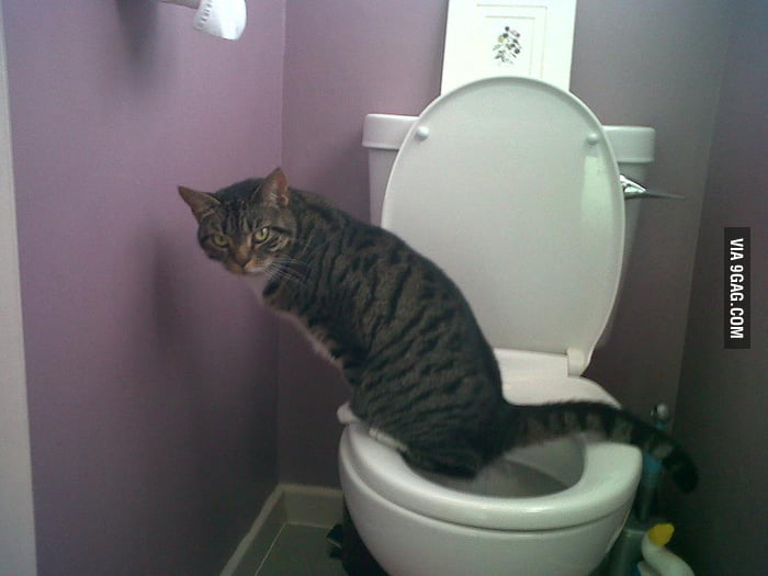 This cat can use human toilet properly.