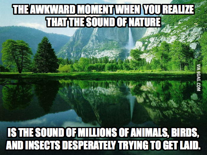 The sound of nature.